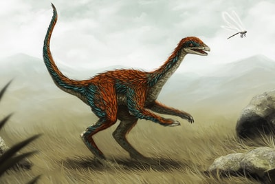 Dinosaur Visualisation
